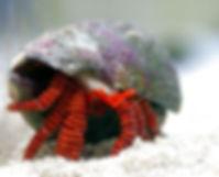 halloween_hermit_crab.jpg
