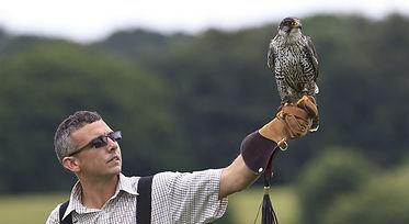 falconru.jpg