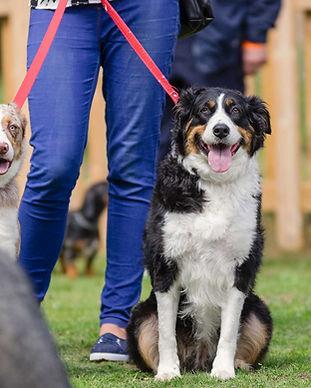 hampshire-pet-fair-collie-dog-show.jpg