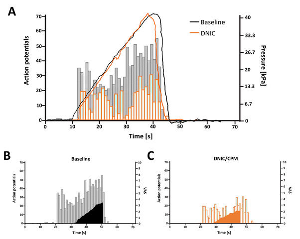 Pressure cuff as a good measure of DNIC in rats and CPM in humans.