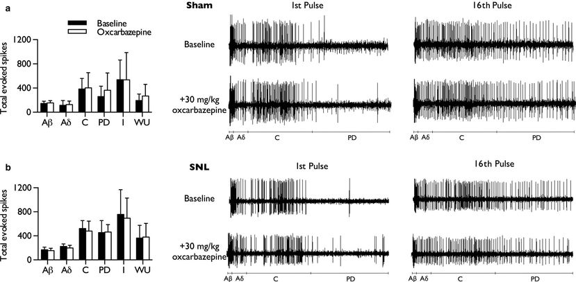Oxcarbazepine does not inhibit wind‐up of lamina V/VI WDR neurones in either sham or SNL rats.