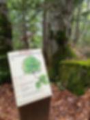 L'arboretum des Nantieux.jpg
