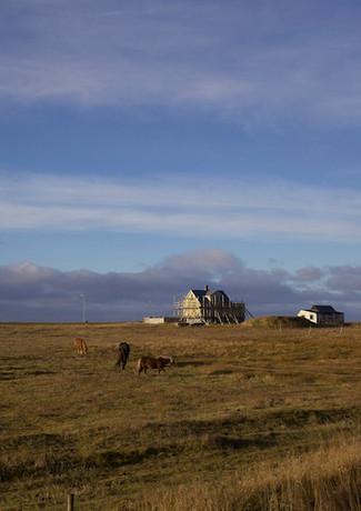 Icelandic Horses in Garður