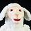 Thumbnail: Ovelha