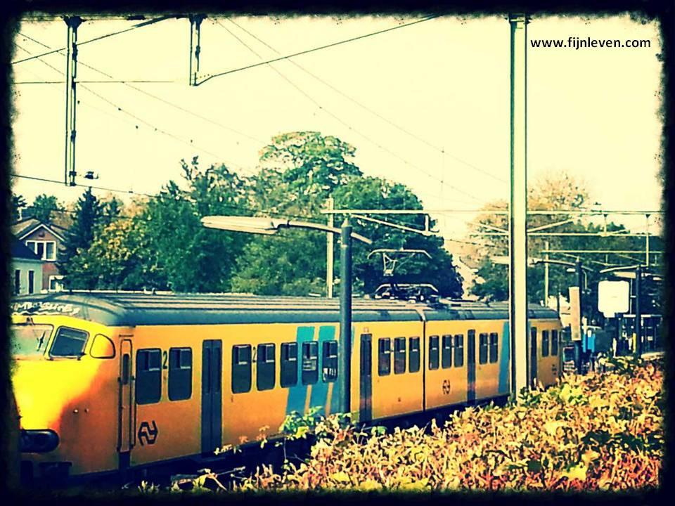 trein reis.jpg