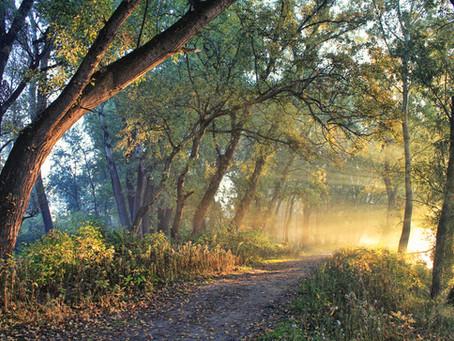 The Royal Road - new blogpost by Ervin Laszlo