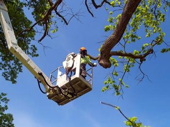 Tree-Surgeon-Using-A-Cherry-Pi-150866489