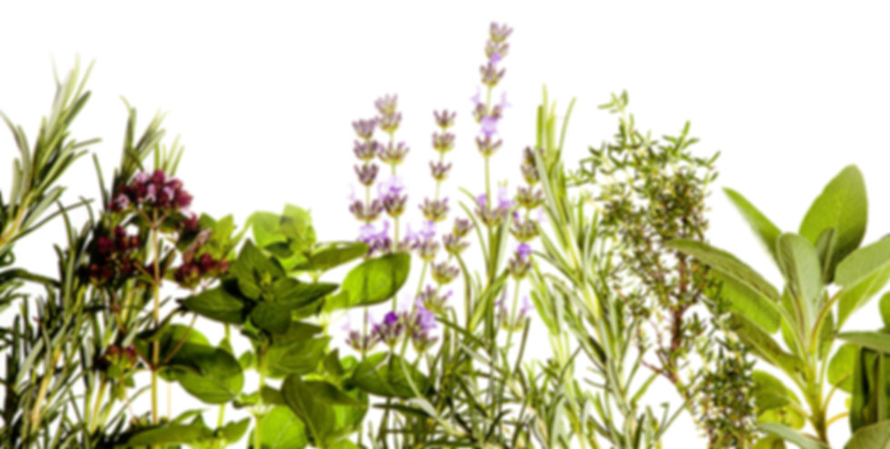 herbs for the purest esthetics at puresthetique