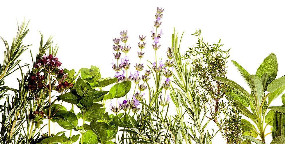 Mediterranean herbs on pure white backgr