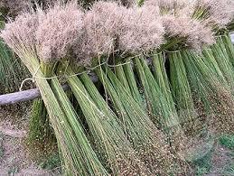 flax plant linen