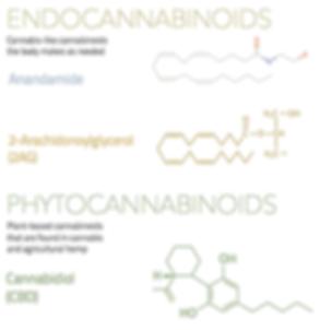 endocannabinoid-system-ECS-pluscbdoil.co