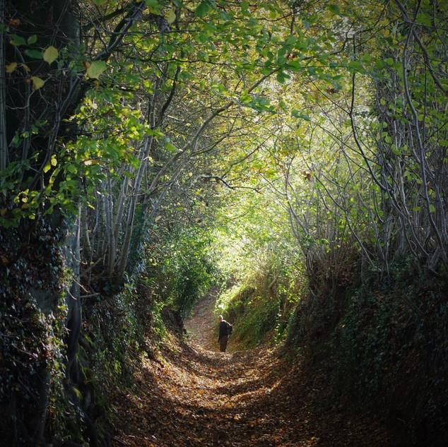 Chemins creux