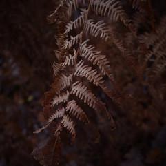 En forêt d'Andaine