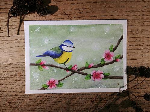 Ostara - Carte Mésange Bleue