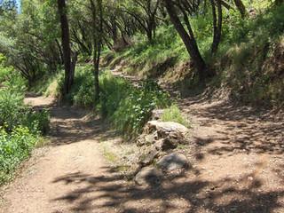Dragoon Healthy Trails Day-- Nov. 4th
