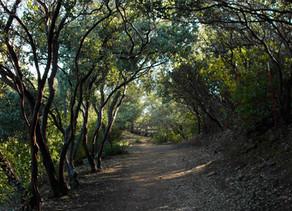 Dragoon Gulch Trail