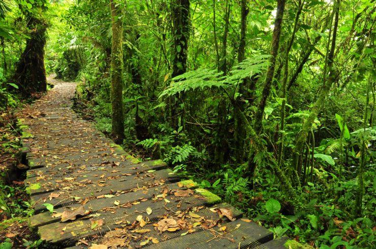 Monteverde trail