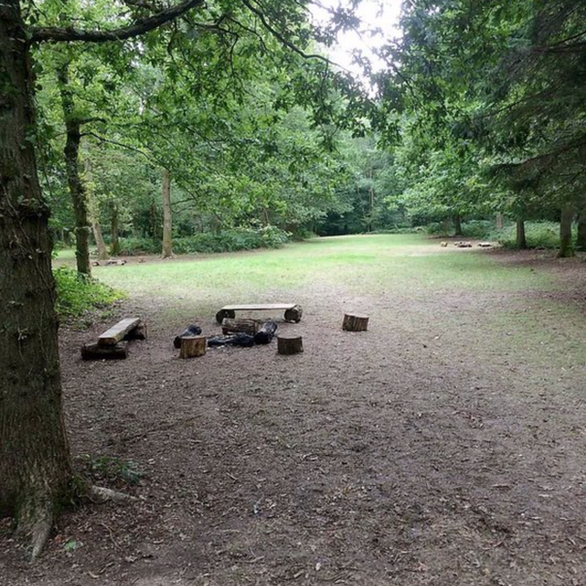 Fox Wood Camping - woodland camping West Sussex