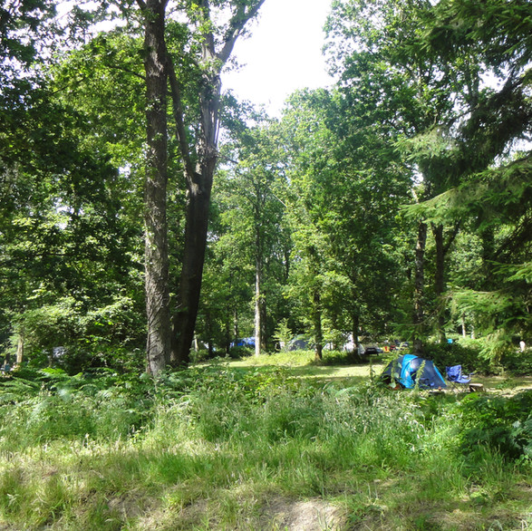 Camping in the forest at Fox Wood