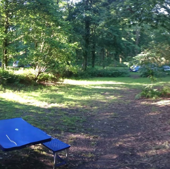 Fox Wood camping West Sussex