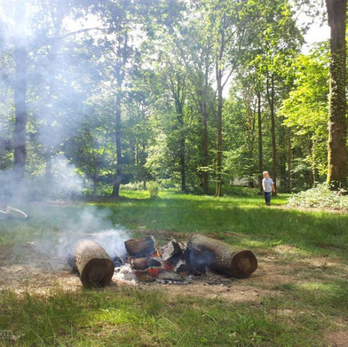 Fox Wood is a new forest campsite in Sussex