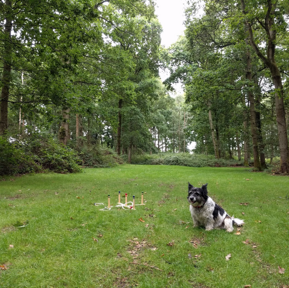 dog friendly campsites