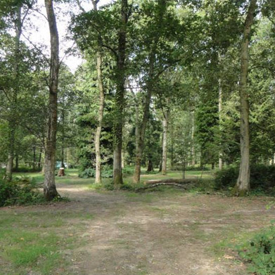 Sussex woodland camping