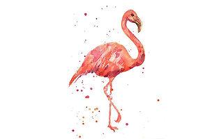 FlamingoProject.jpg