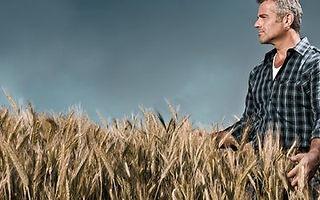 Weizenmehl-macht-dick-und-krank-Titelbil