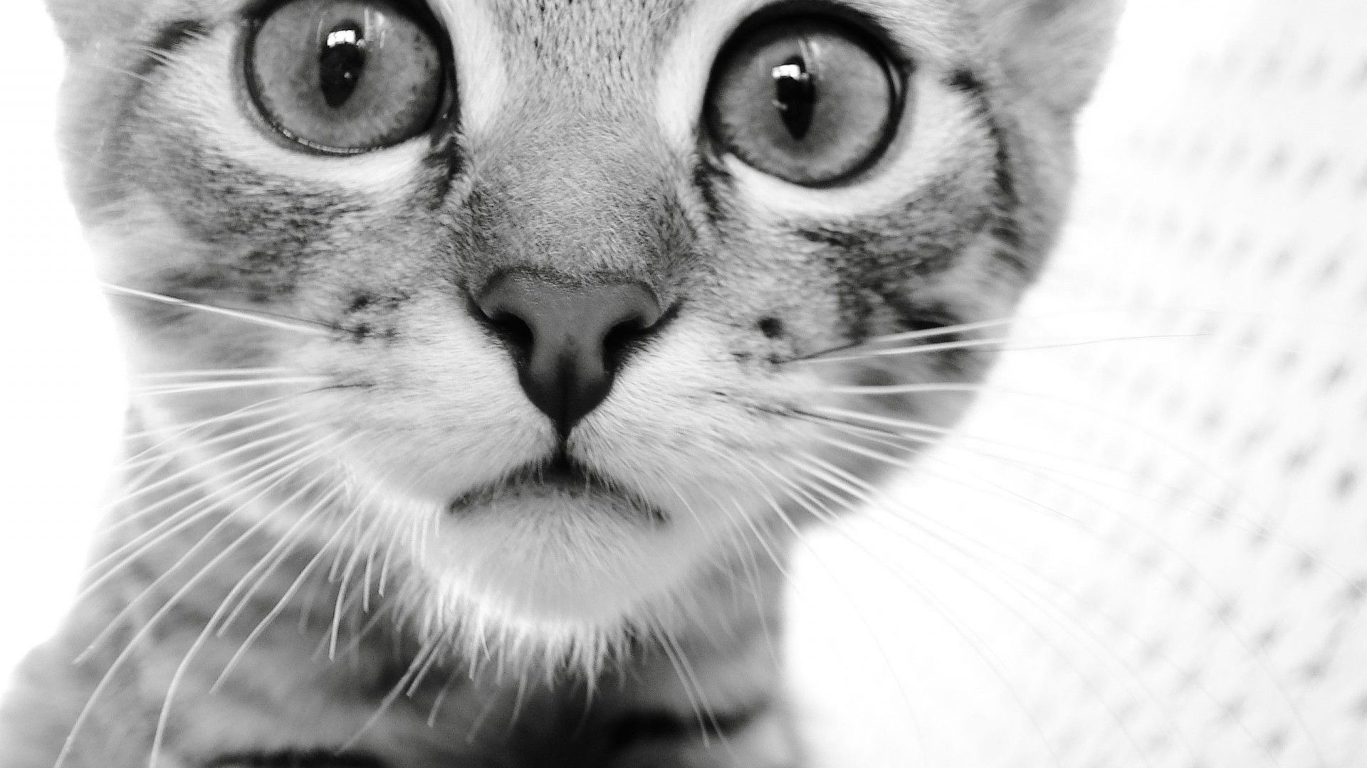 8LEoFGj-black-and-white-cat-wallpaper