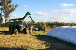 Richiger Grain Cart and Extractor