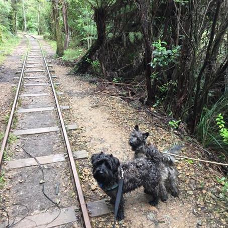 Tauranga Adventure