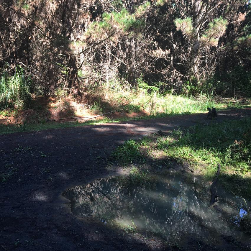Forest track entrance