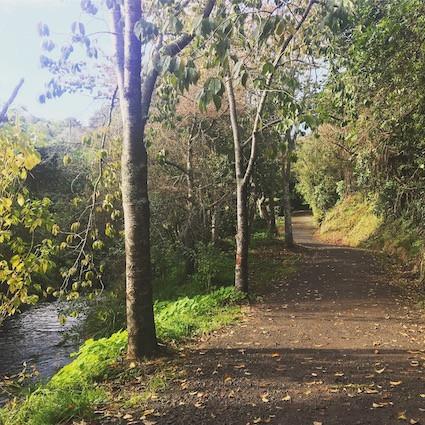 Huatoki Walkway, Lower Vogeltown - New Plymouth