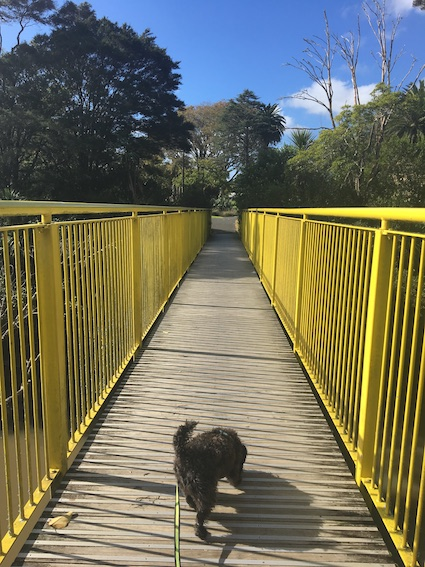 Bridge to Tui Glen Reserve