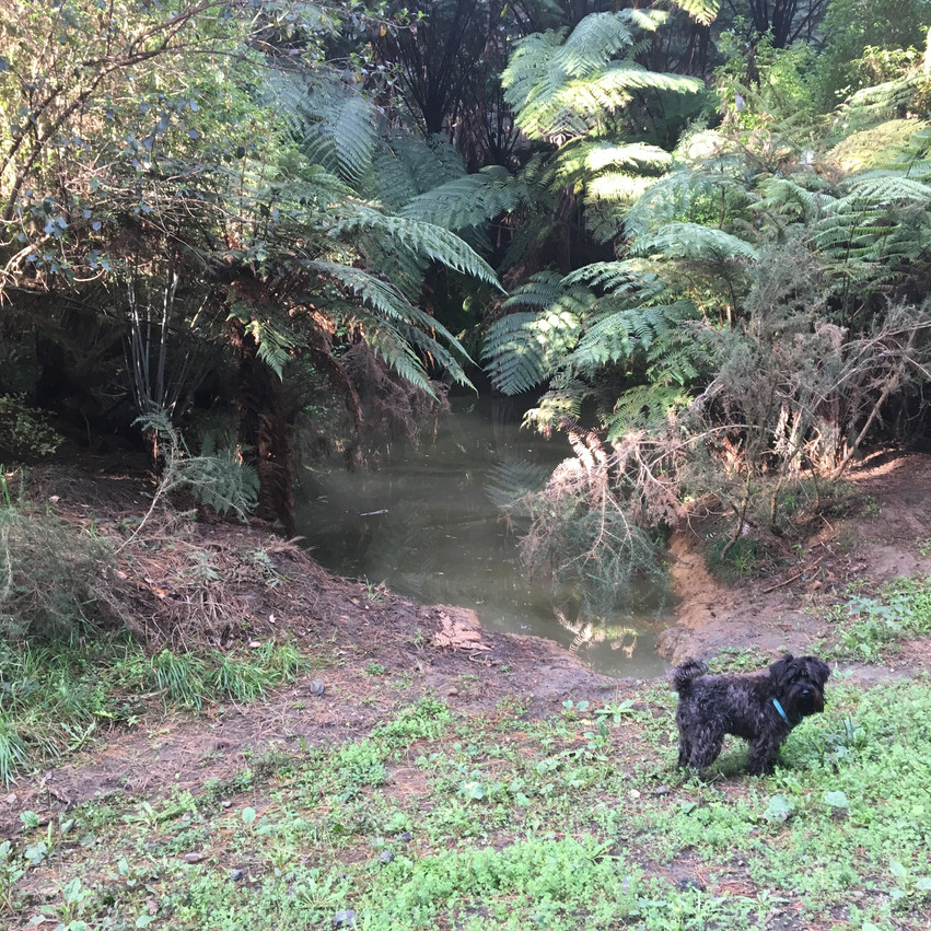 Many dirty waterholes around Barlow Road, but no clean ones!