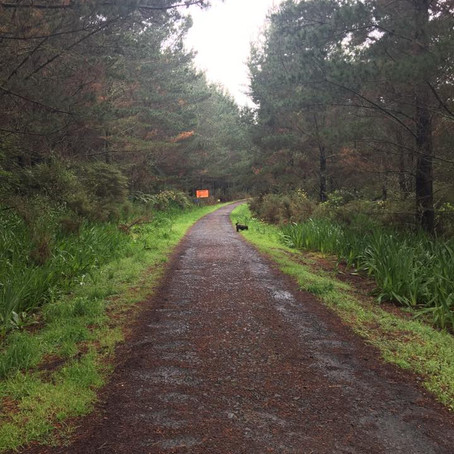 Riverhead Forest - Foresty Road aka 'Hell' Walk