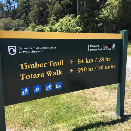 Pureora Forest Park - Wharepuhunga