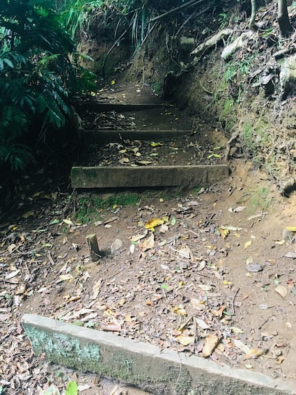 Steps back up to Budleigh