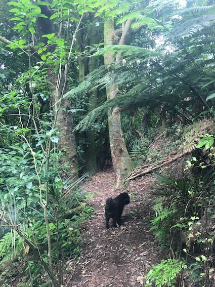 Walkway back through bush