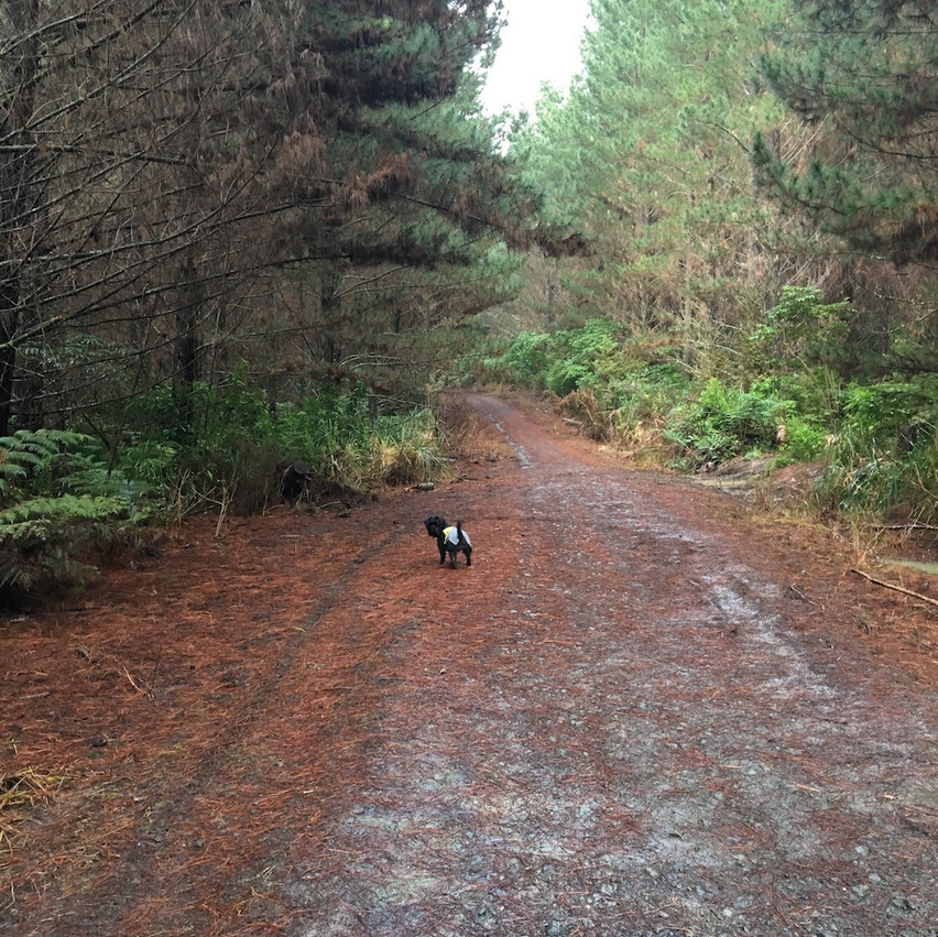 Trig Road Forest Track