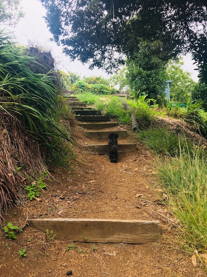 Steps up to Budleigh