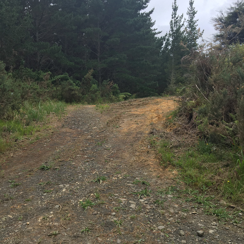 Foresty Road entrance off Browns Road