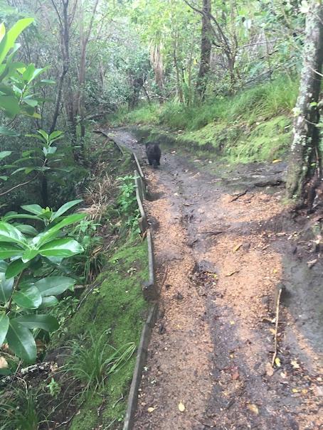 Left track after the bridge