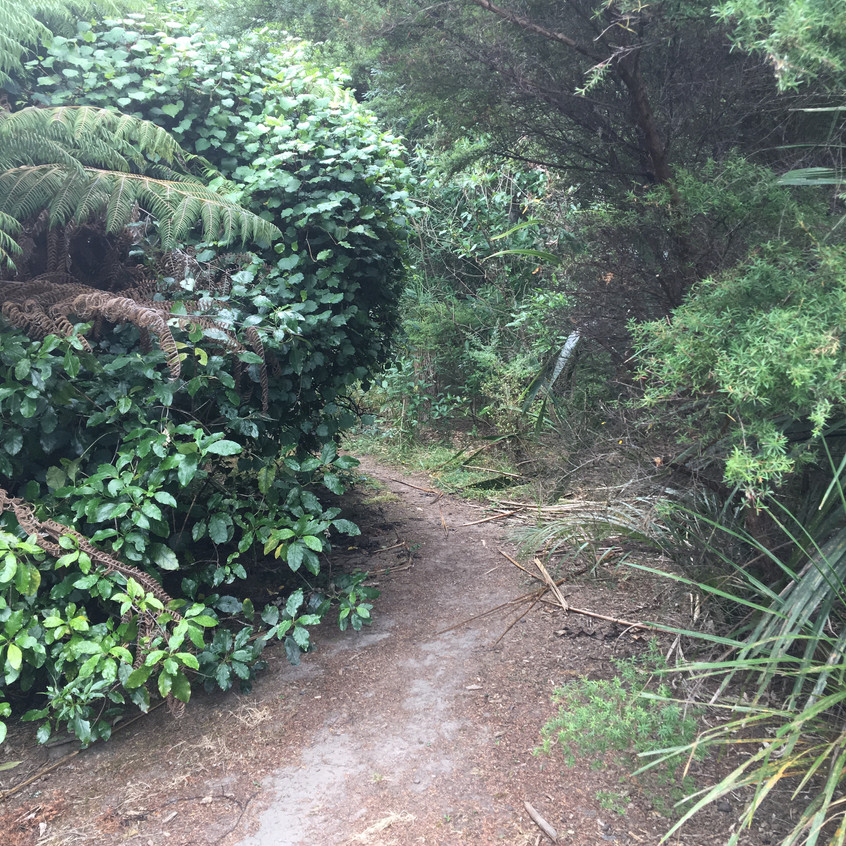 Entrance to the bush track