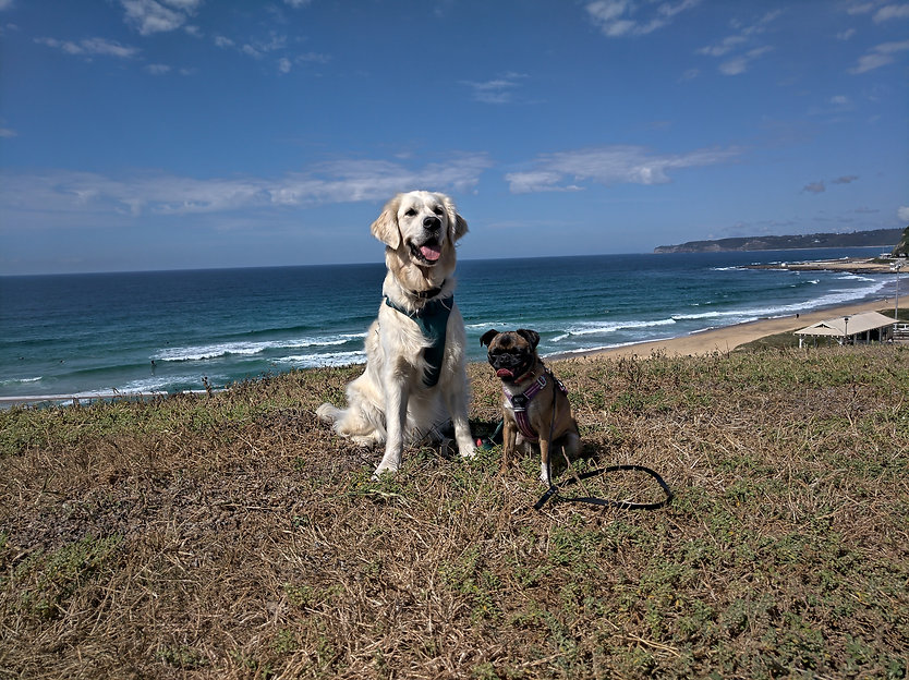 Dog Trainer Newcastle Maitland