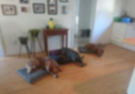 Dog Trainer Maitland Newcastle