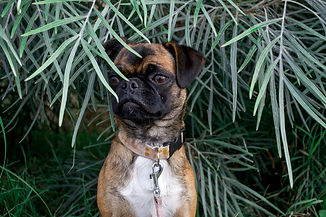 Dog Trainer Newcaste Maitland