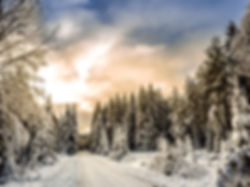 Forest Road neige