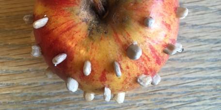 Apple 'hedgehog'